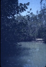 Everglades, Taylor River